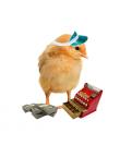 Crotte de poule - bijoux - poussin- promo