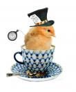 Crotte de poule - bijoux - poussin- Midnight in Wonderland